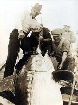 ANTIQUE REPRO SALTWATER FISHING PHOTO > MEN LANDING HUGE MAR